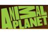 Play Animal Planet Videos